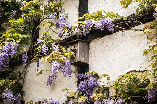 Nesting Boxes for Your Backyard Habitat